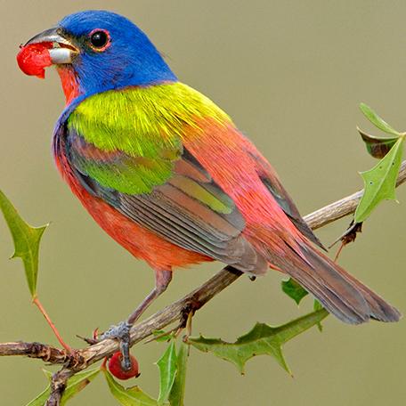 Bhutan  Birds Festival